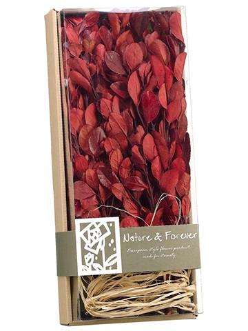 """4.1""""H x 7""""W x 16.9""""L AssortedPreserved Tea Leaf Pick inBox Red"""