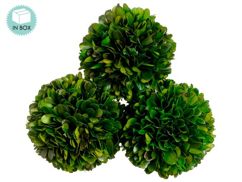 "4.3""D Preserved Boxwood Ball (3 ea/acetate box) Green"