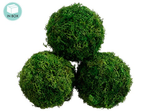 "4.3""D Preserved Sphagnum Moss Ball (3 ea/acetate box) Green"