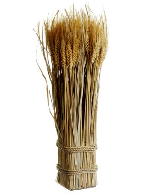"""16.9"""" Preserved Wheat/GrassStanding TwigNatural"""