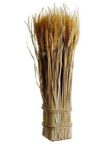"16.9"" Preserved Wheat/Grass Standing Twig Natural"