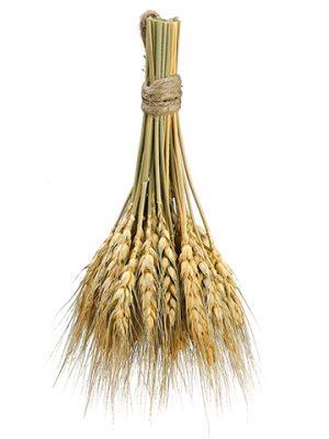 "8.2"" Preserved Wheat Bundle Natural"