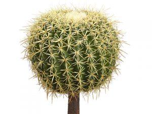 """12""""H x 9""""D Barrel Cactus Green"""