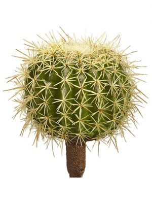 "8""H x 5""D Barrel Cactus Pick Green"