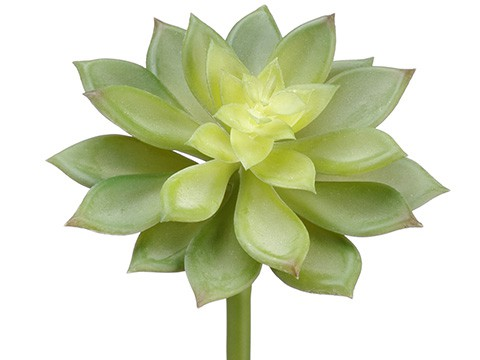 "10"" Soft Echeveria Pick Green"