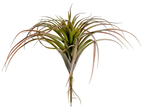 "11"" Tillandsia Green Burgundy"