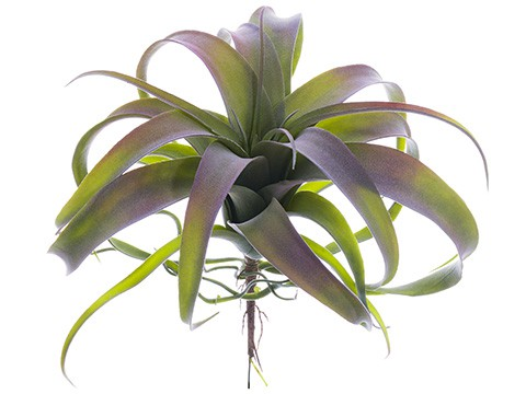 "10.5"" Tillandsia Pick Green Gray"