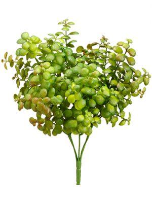 "12"" Jade Plant Green Burgundy"
