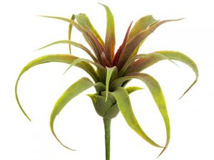 "8""H x 5""D Tillandsia Pick Green Red"