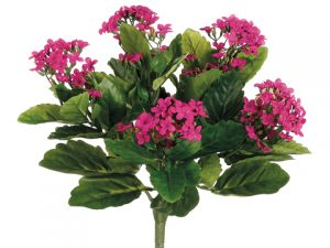 "13.5"" Kalanchoe BusH x 5 with150 FlowersFuchsia"