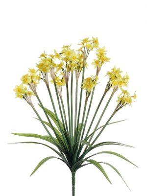 "19"" Narcissus BusH x 14 Yellow Yellow"