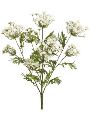"21.5"" Queen Anne's Lace Bush x5 Cream"