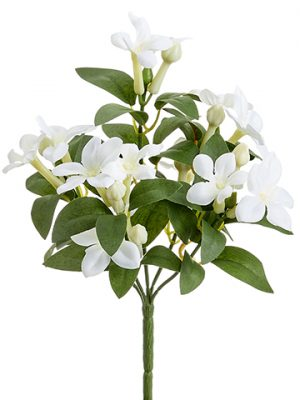 "10"" Stephanotis BusH x 5 White"