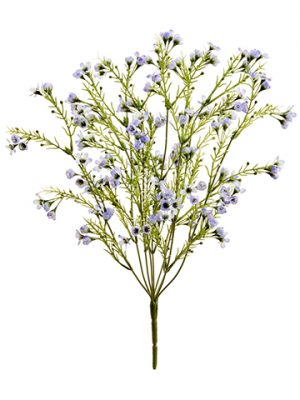 "18"" Waxflower BusH x 8 Lavender Purple"