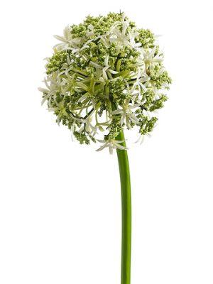 """31"""" Allium Spray Cream"""