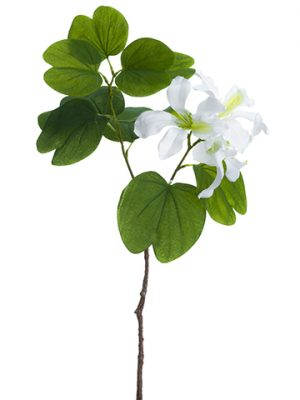 "22"" Bauhinia Spray White"