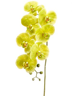 """42"""" Phalaenopsis Orchid Spraywith 7 Flower and 5 BudsGreen"""