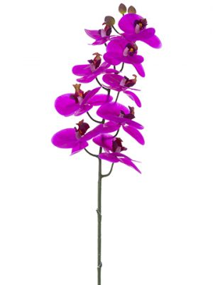 "36"" Phalaenopsis Orchid Spray with 9 Flowers and 2 Buds Orchid"