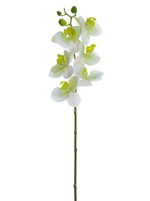 "30"" Phalaenopsis Orchid Spray Cream Greem"