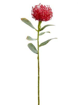 "21"" Protea Spray Red"