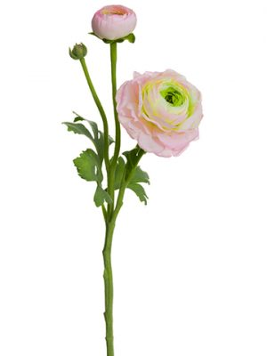 "15"" Ranuculus Spray With Bud Pink Green"