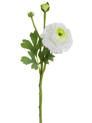 "15"" Ranuculus Spray With Bud White Green"