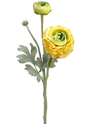 "15"" Ranuculus Spray With Bud Yellow Green"