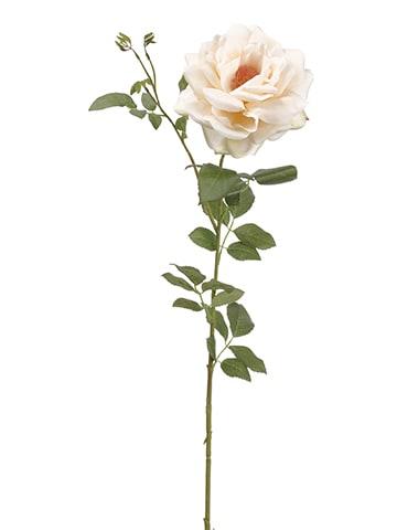 """38"""" Rose Spray Blush"""