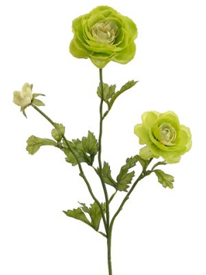 "27"" Ranunculus Spray x3 Green"