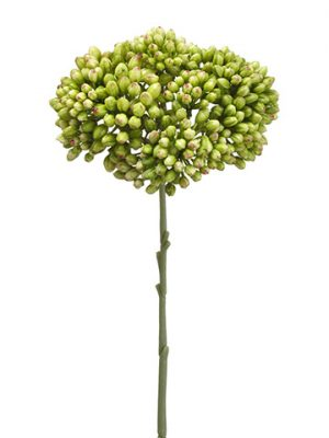 "12.5"" Sedum Spray Green"