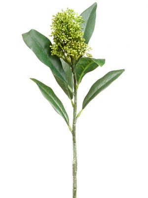 "13.5"" Skimmia Spray Green"