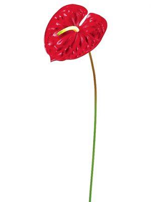 """24"""" Anthurium Spray Red"""