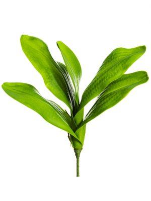 """15"""" Phalaenopsis Orchid LeafPlantGreen"""