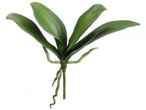 """12"""" Phalaenopsis Orchid LeafPlantGreen"""