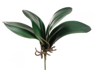 "12"" Phalaenopsis Orchid Leaf Spray Green"