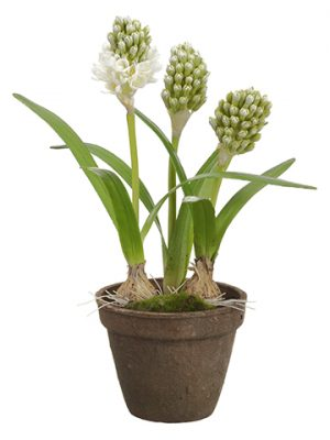 "15.5"" Hyacinth With Bulb in Terra Cotta Pot White Green"