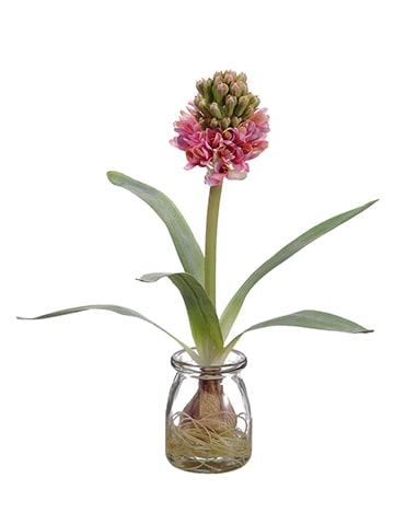 """12"""" Hyacinth w/Bulb in GlassVaseCerise"""