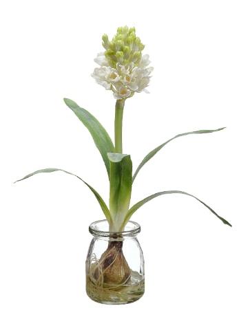 """12"""" Hyacinth w/Bulb in GlassVaseWhite"""