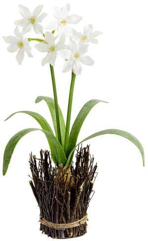 "18"" Narcissus With Bulb in Twig Container White"