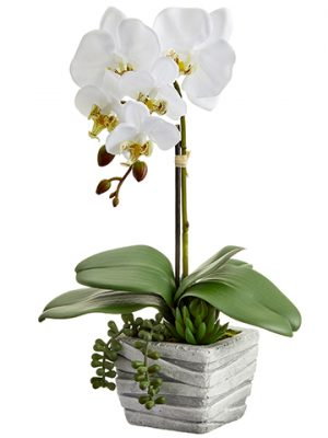 "16"" Phalaenopsis Orchid Plant/Succulent in Cement Pot White"