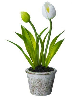 """9"""" Tulip in Paper Mache Pot White"""