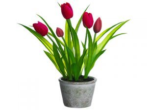 "13"" Tulip in Paper Mache Pot Red"