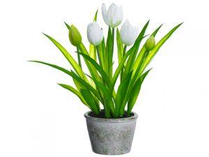 """13"""" Tulip in Paper Mache Pot White"""