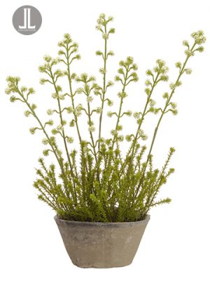"20"" Horseweed Plant With Bloom in Clay Pot Cream Green"