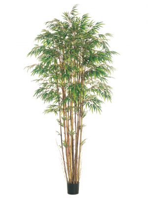 8' Natural Trunk Bamboo Tree x17 w/3040 Lvs. in Pot Two Tone Green