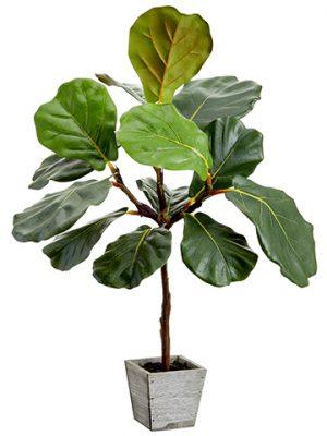 """23"""" Fiddle Leaf Tree in WoodPlanterGreen"""