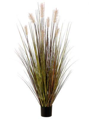 "60"" Pampas Grass in PlasticPotGreen Rust"