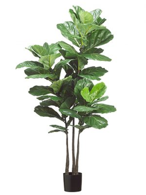 "70"" Fiddle Leaf Plant x3 with 53 Leaves in Pot Green"