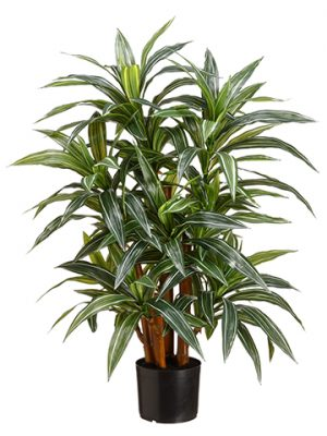 "33"" Yucca Plant x4 174 leaves in Pot Cream Green"