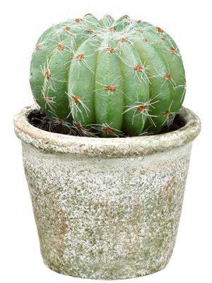 """4.25"""" Barrel Cactus in PaperMache PotGreen"""